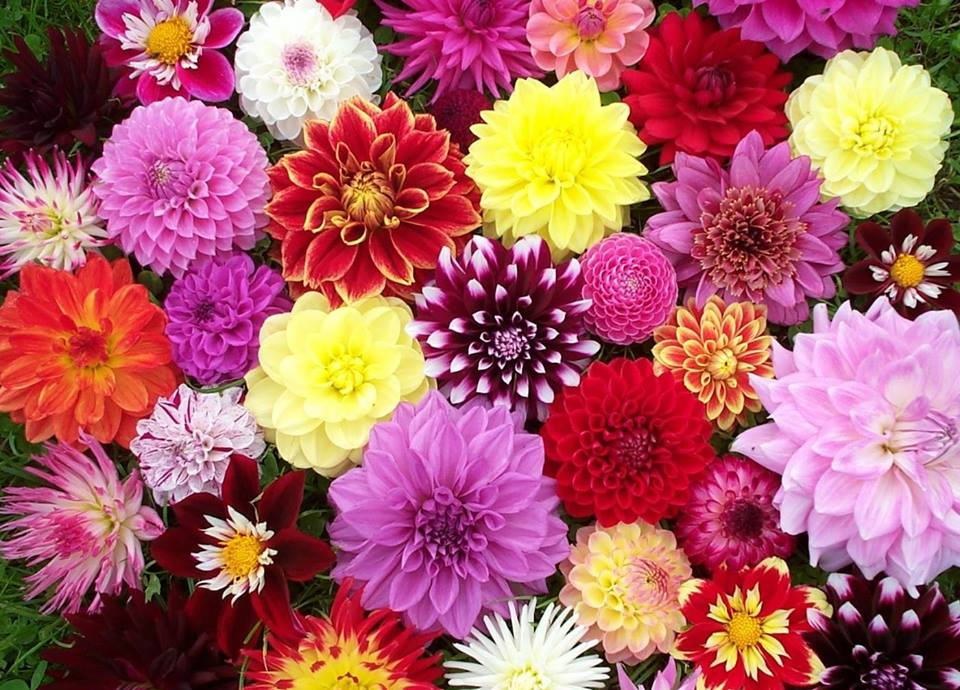 Virágünnep @ Krisna-völgy | Somogyvámos | Magyarország